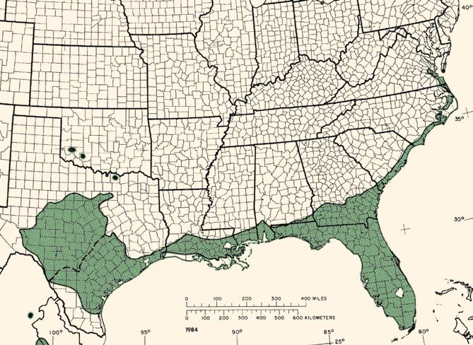 Map showing range of live oak along coasts of the Southeast