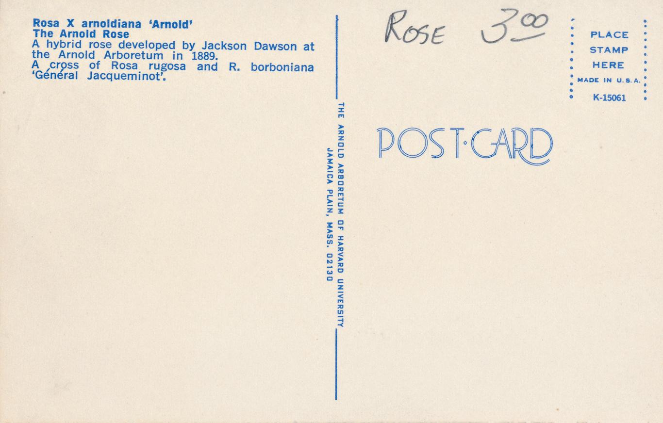 Back side of post card
