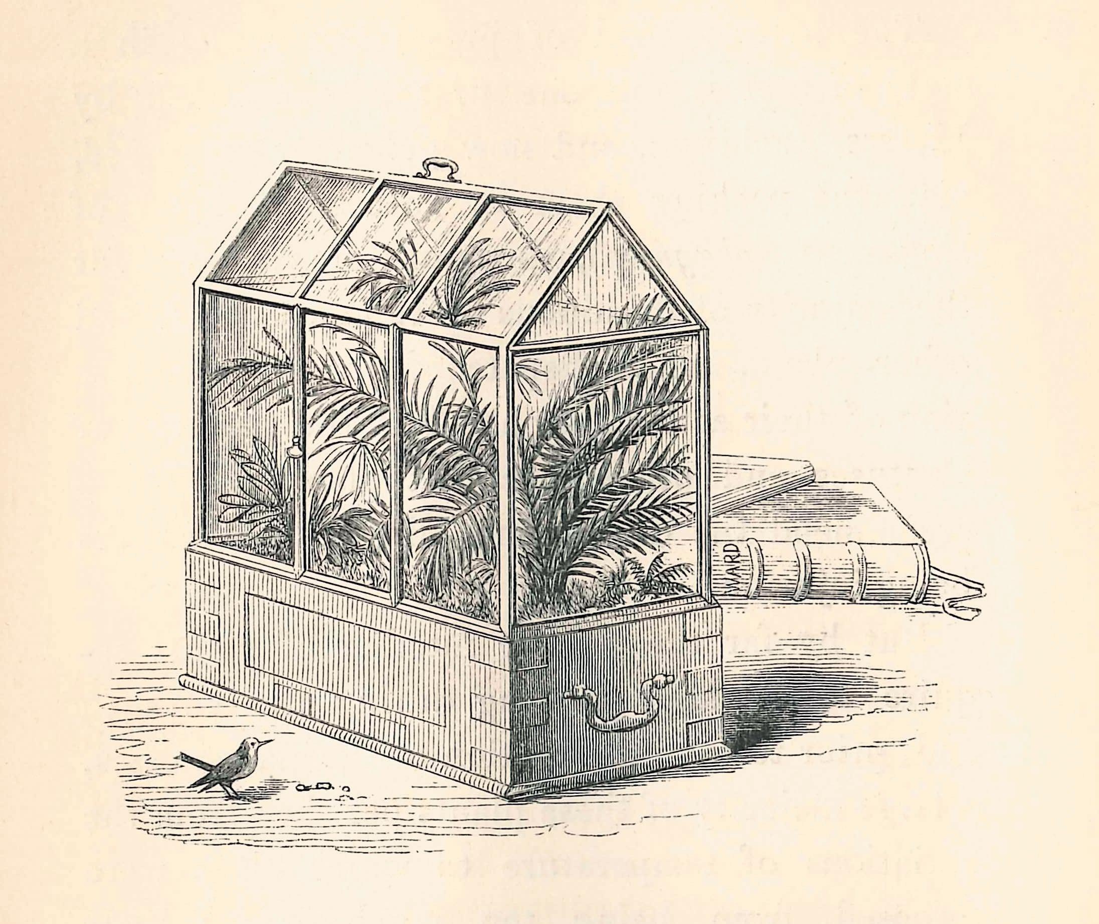A sketch of a Wardian case.