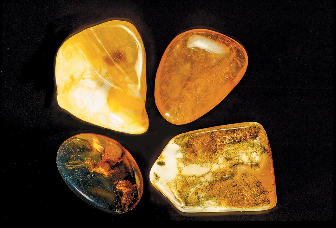 A color photo of amber specimens.