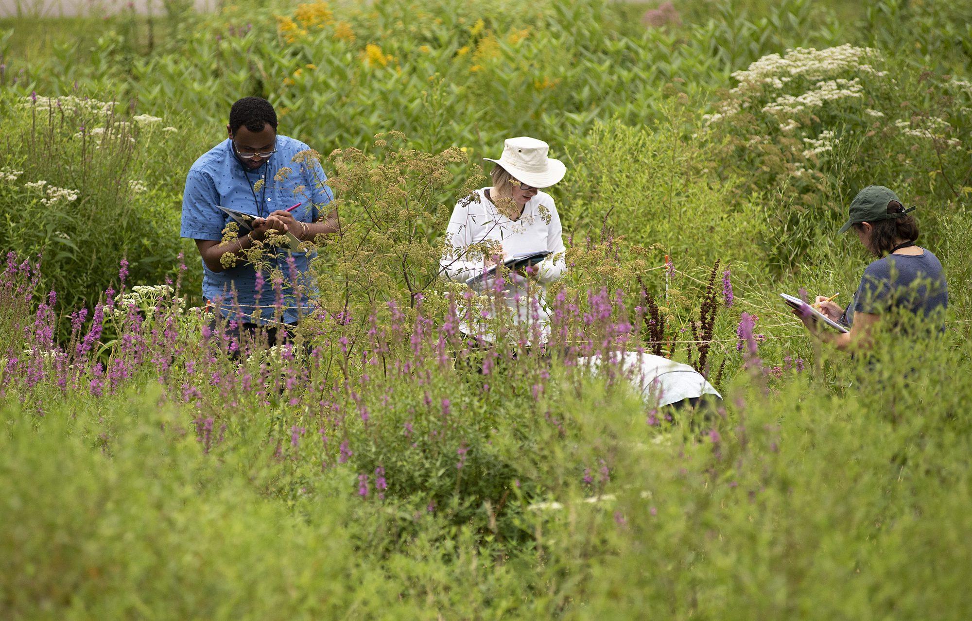 Gathering data on Kent Field
