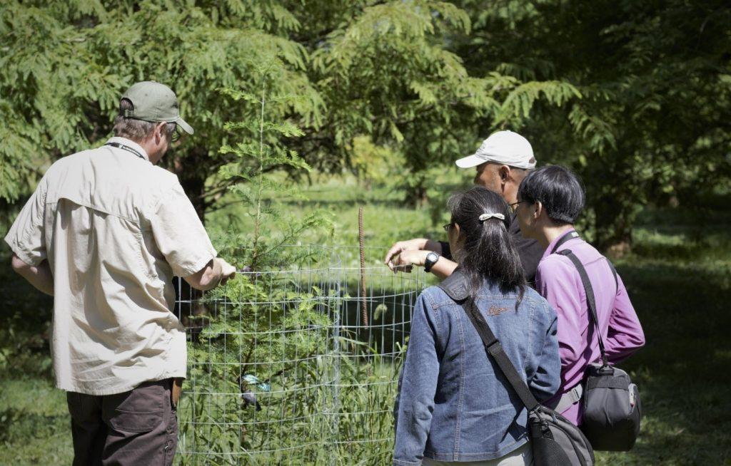 Metasequoia at Dawes Arboretum by Sean Halloran