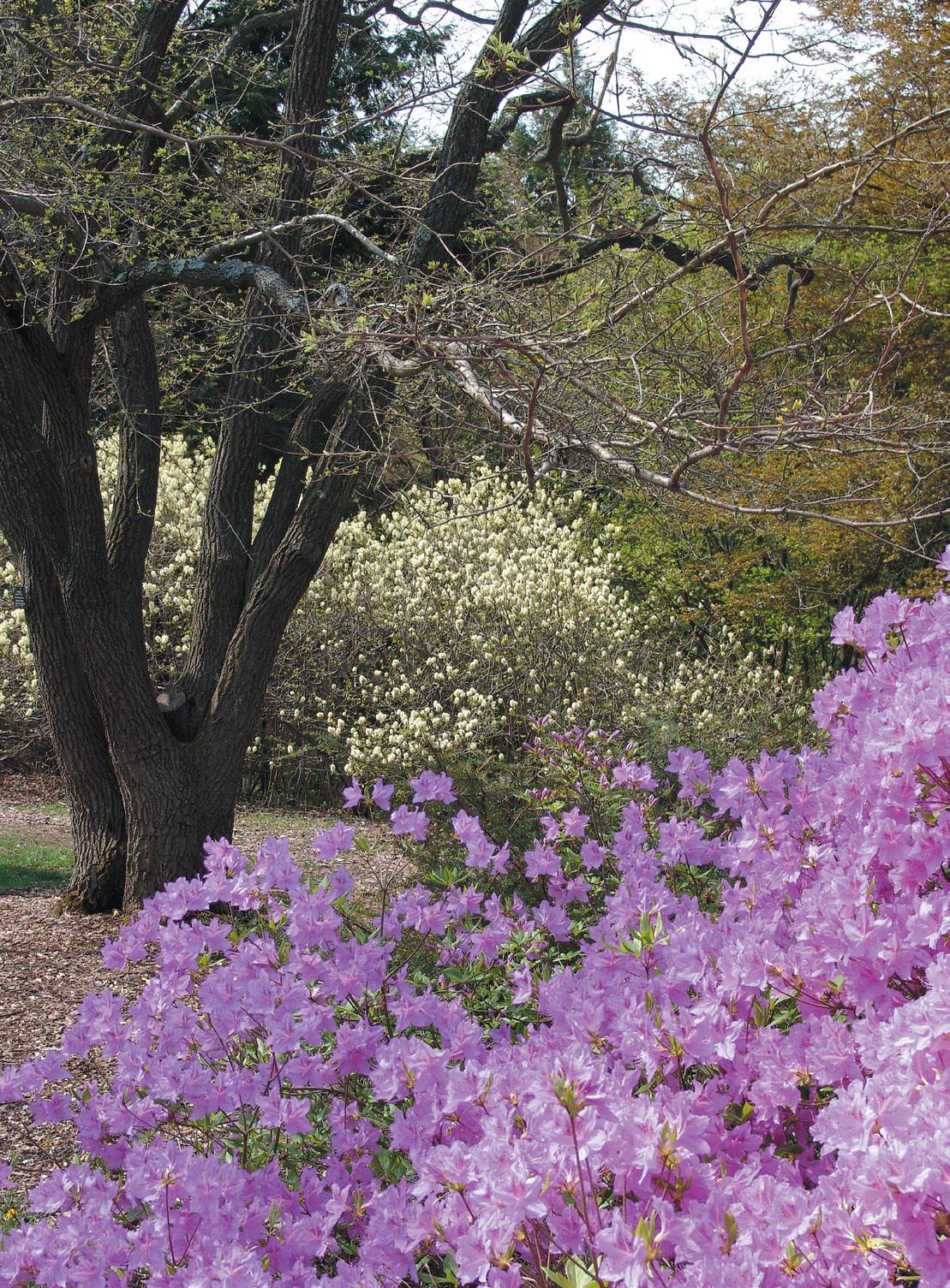 Photo of Explorers Garden in spring