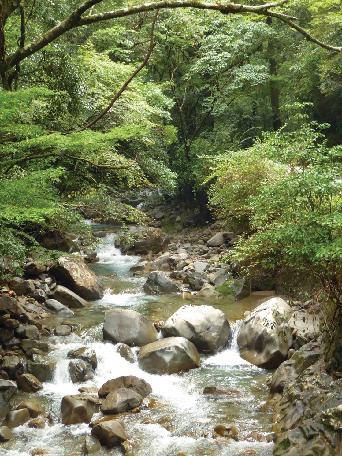 Mountain stream rushing with water
