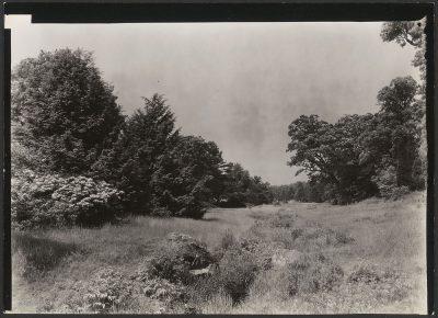 Bussey Brook, summer