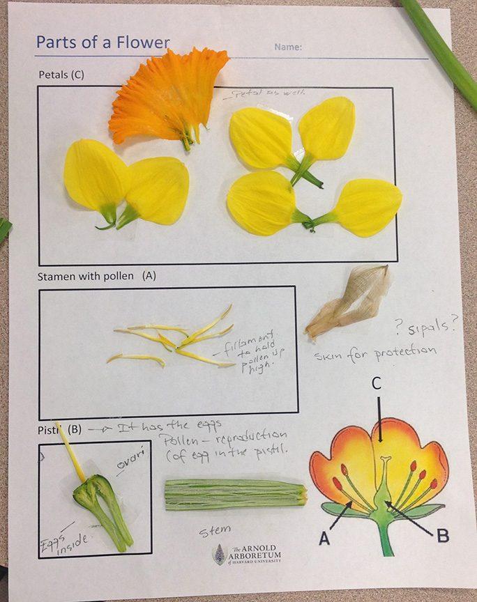 flower parts organizer