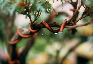 Wire on a bonsai branch