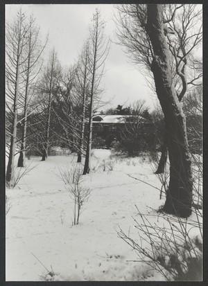 Snow Scenes, spring, North Meadow, 1984