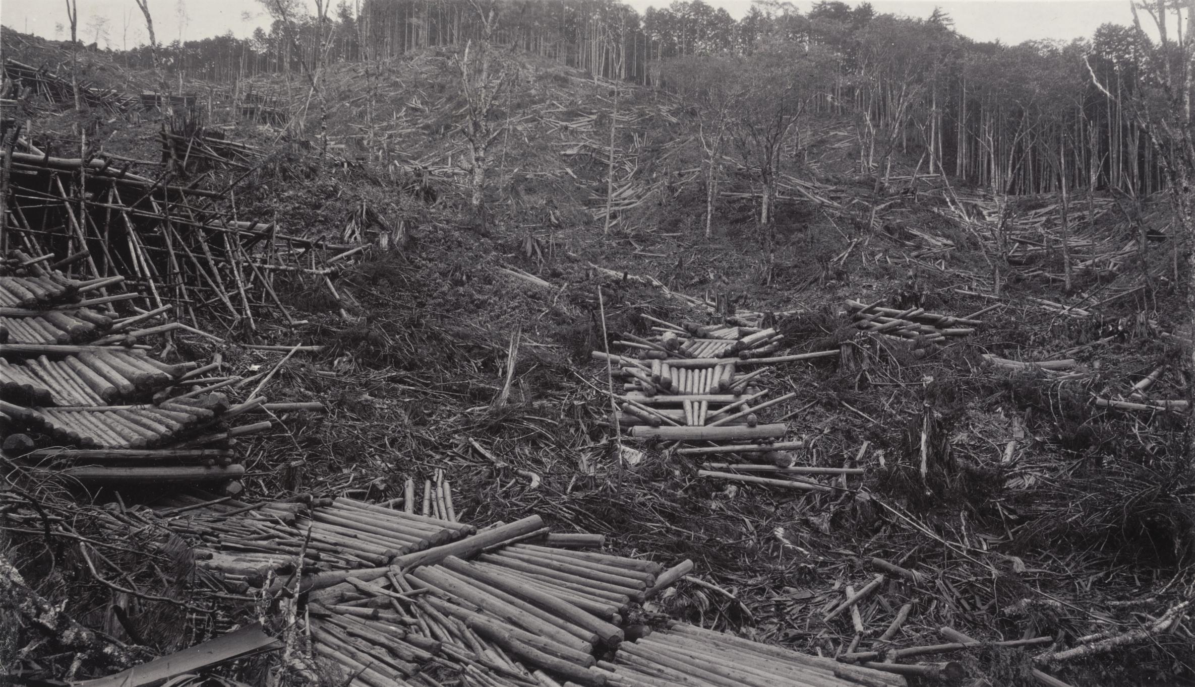 A timber slide of Chamaecyparis obtusa Ogawa forest, Kiso, Japan, photographed by John Jack on September 5, 1905. Altitude 4500 feet (1372 m).