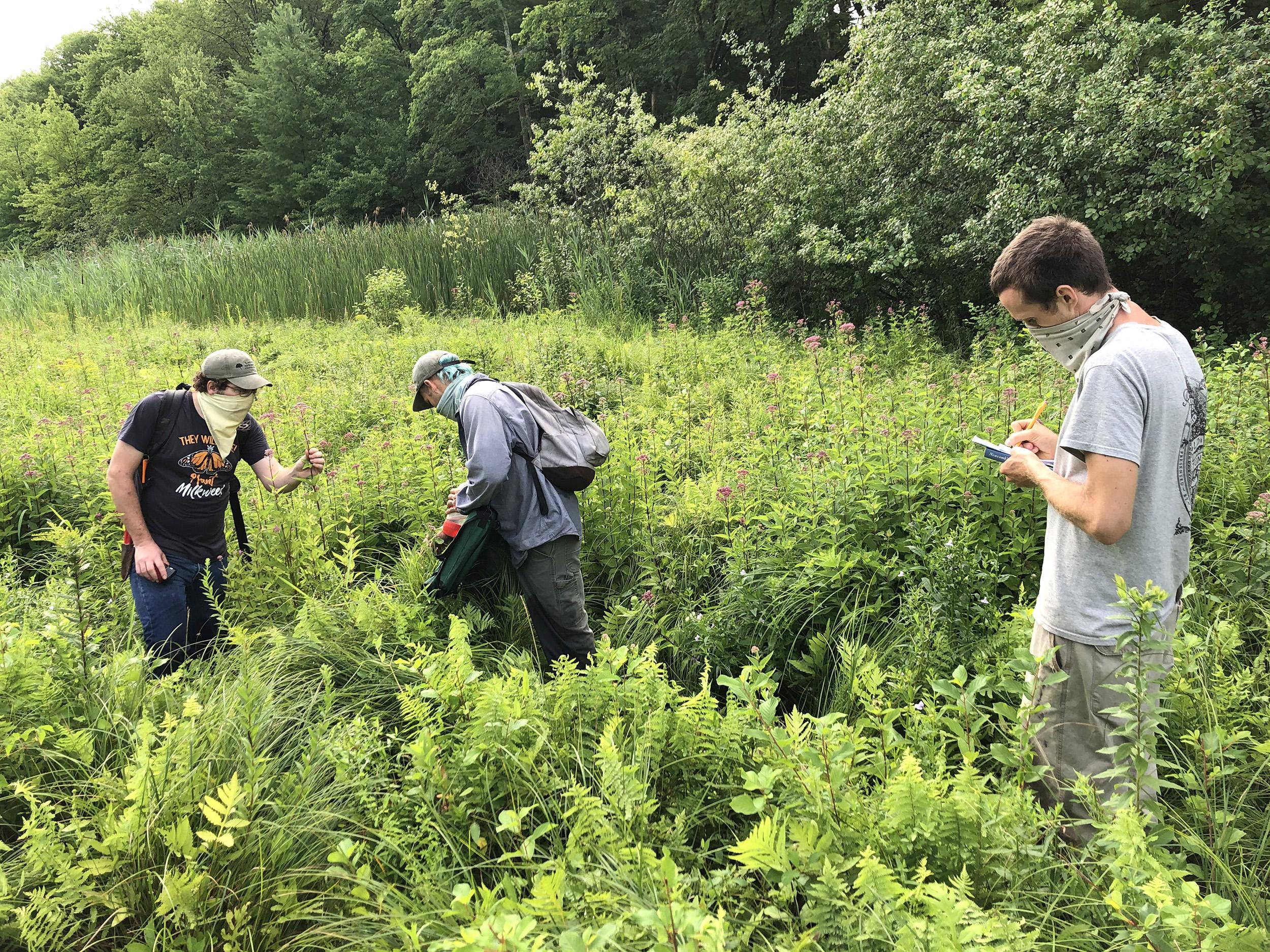 Colin McCallum-Cook, Scott Phillips, and Brendan Keegan collecting plants at Moose Hill Wildlife Sanctuary