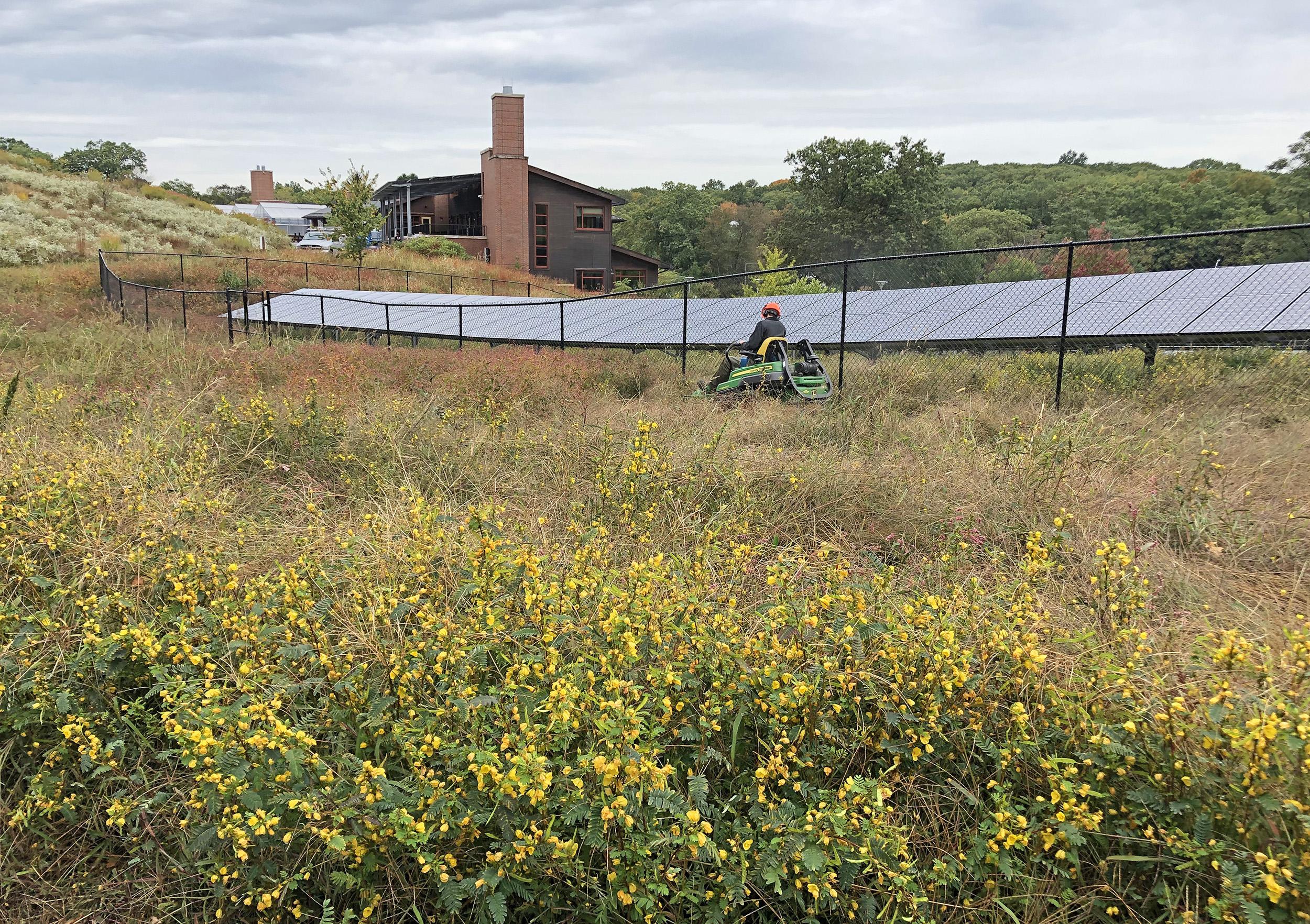 Mowing near the solar array
