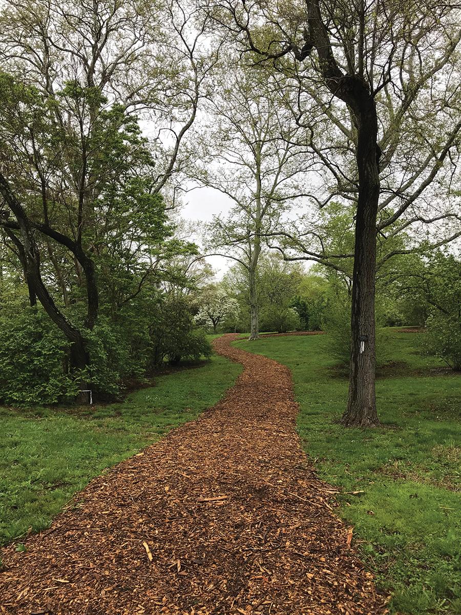 Mulched path through viburnum collection
