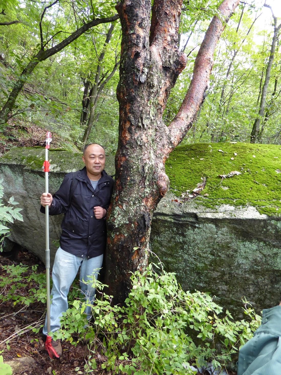 Wang Kang standing beside a large Acer griseum at Yulong Lake in Bao Tian Man Nature Reserve.