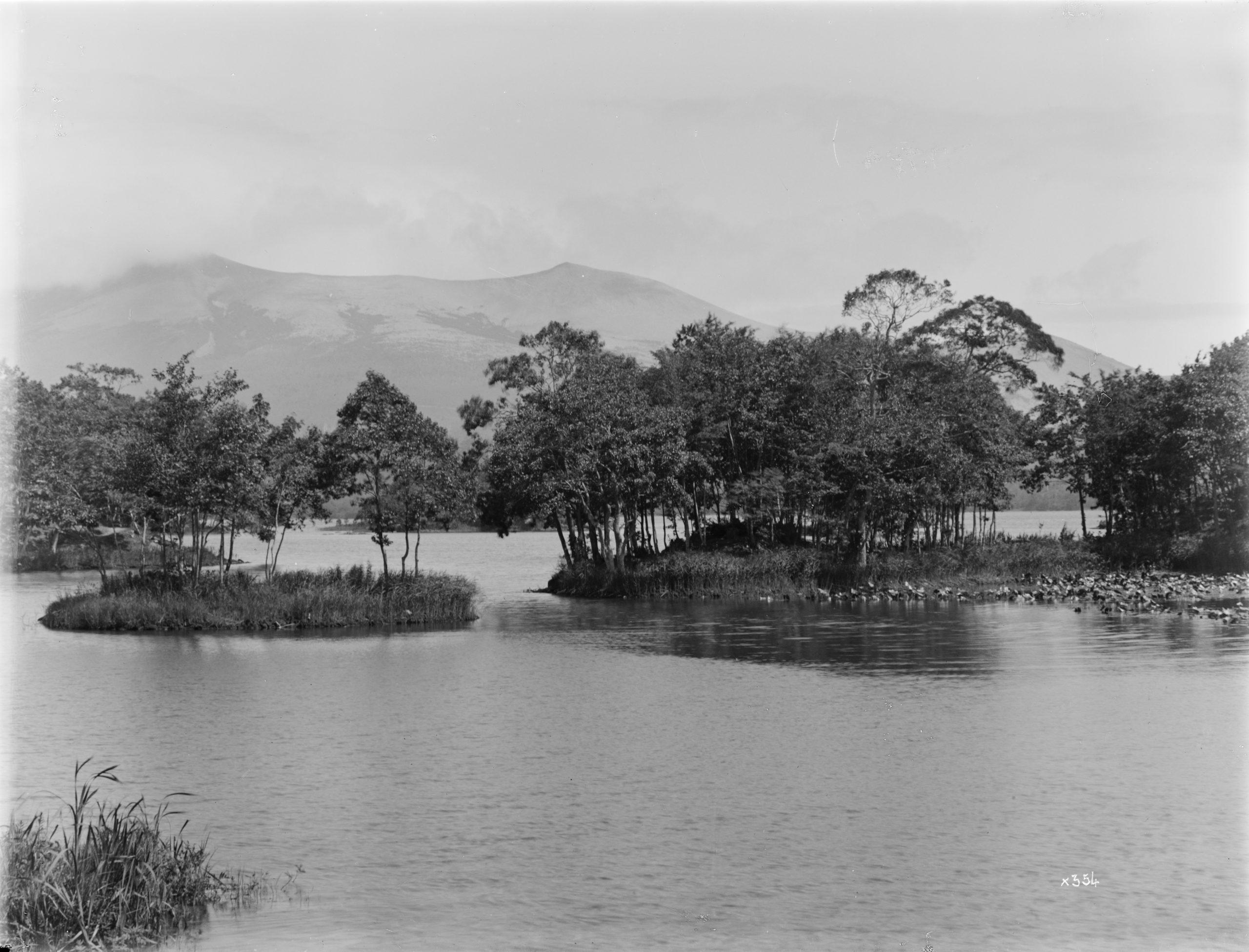 Ernest Wilson photographed this view of Lake Onuma, Hokkaido. The islands contained coppiced Manchurian alders (Alnus hirsuta) and Mongolian oaks (Quercus mongolica var. grosseserrata). Hokkaido Koma-ga-take volcano may be seen beyond.
