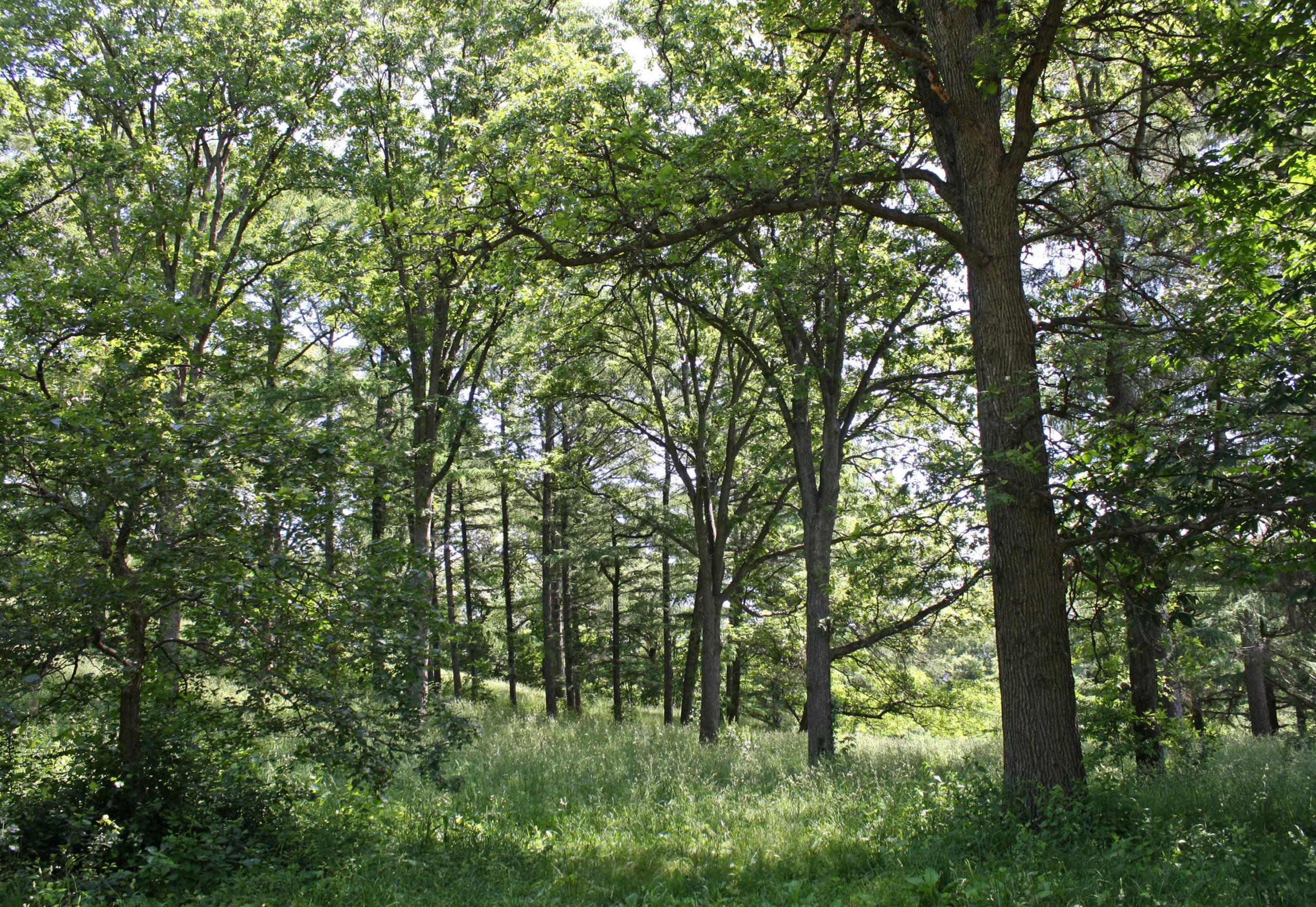 Peters Hill woodlands by Jon Hetman