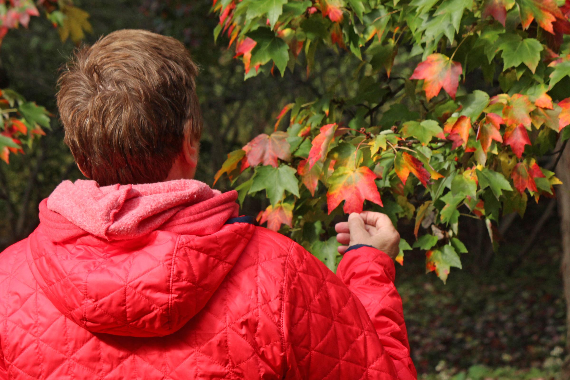 Acer rubrum Tree Spotter