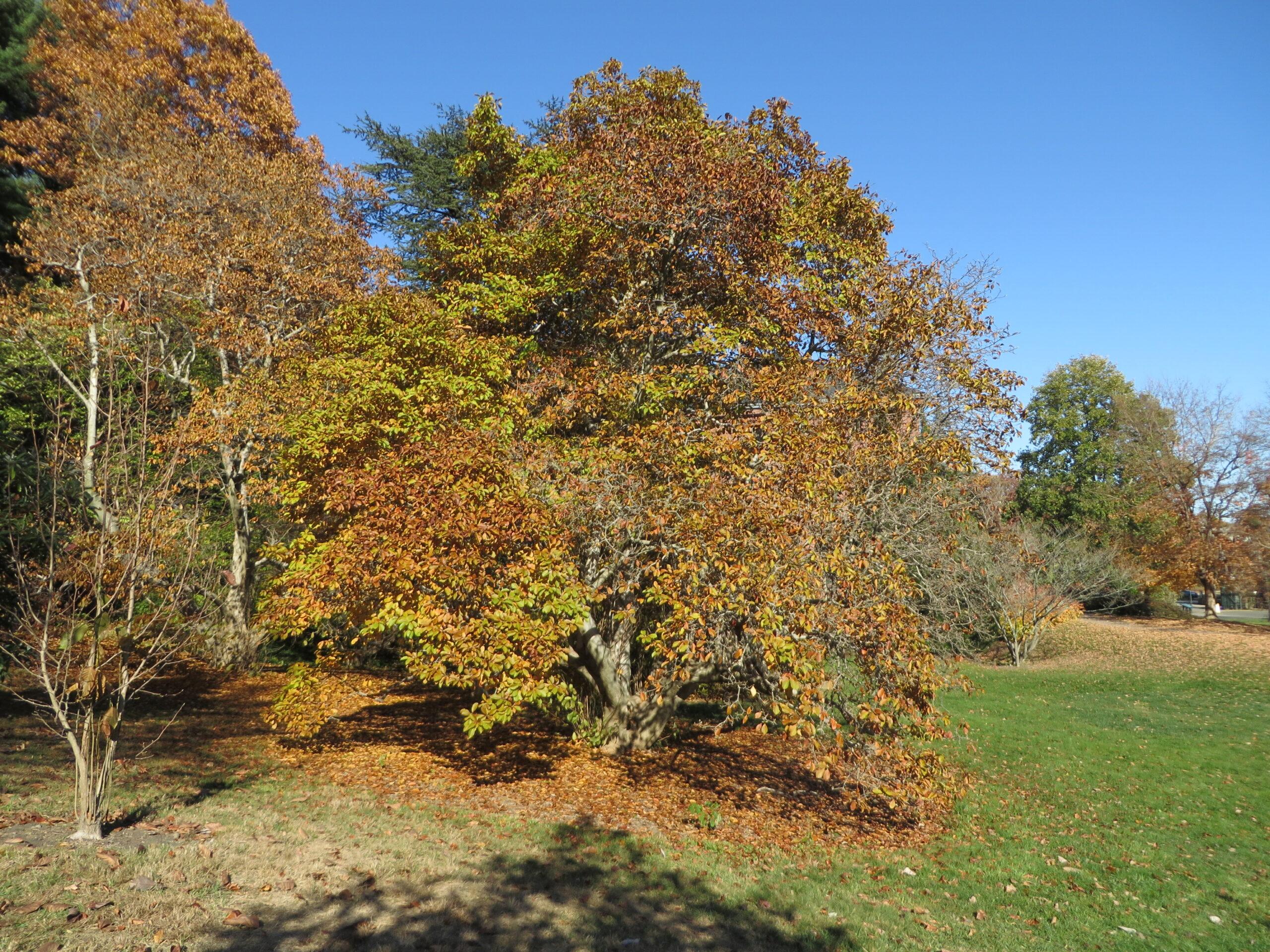 Fall silhouette.