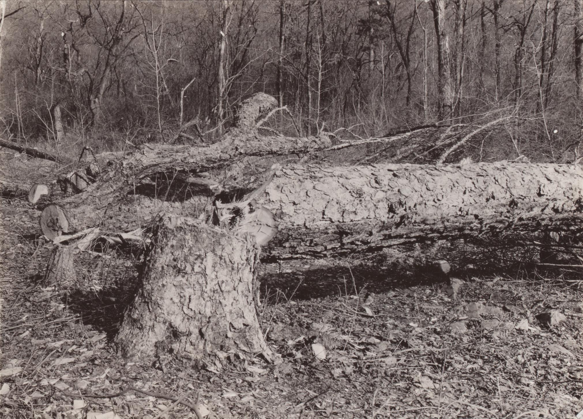Meyer documented deforestation in Hebei,